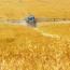 Francie zakázala všech pět pesticidů spojených s úmrtím včel, co Česká republika?