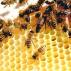 Včelí tanečky I.