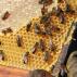 Co dělat, když jsou včely bez zásob